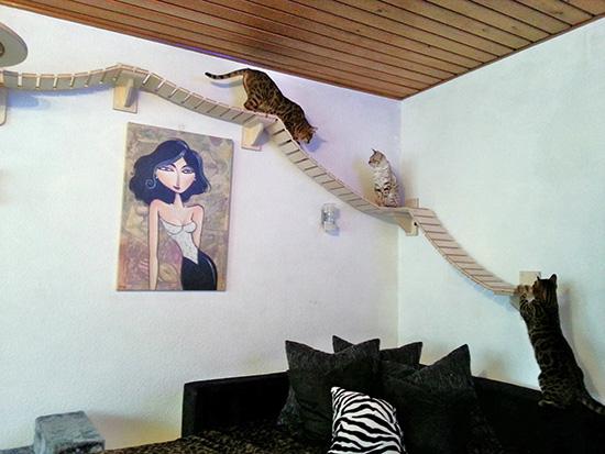 Jeux pour chats aventuriersmon coin design - Parcours mural pour chat ...