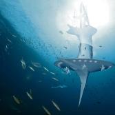 nautilus-exploration-sous-marine