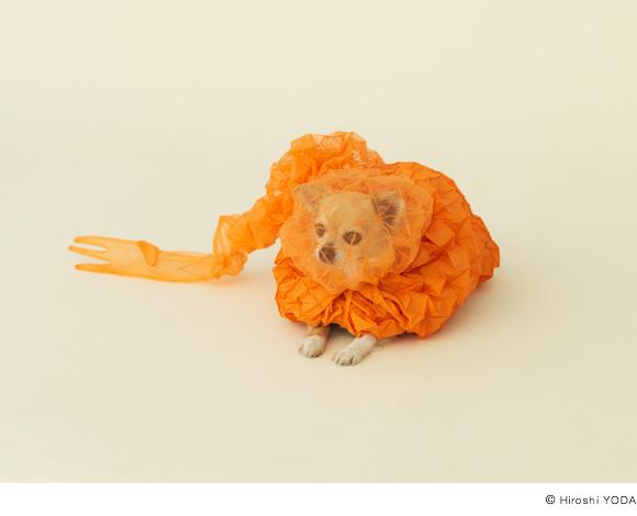 niche-pour-chihuahua
