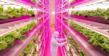 ferme high tech au Japon