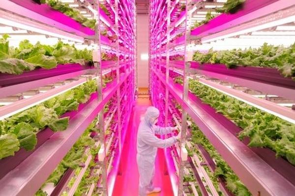 Une ferme à LED 2.0 vient de voir le jour au Japon