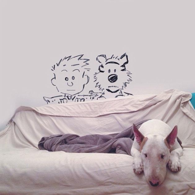 bull-terrier-drole
