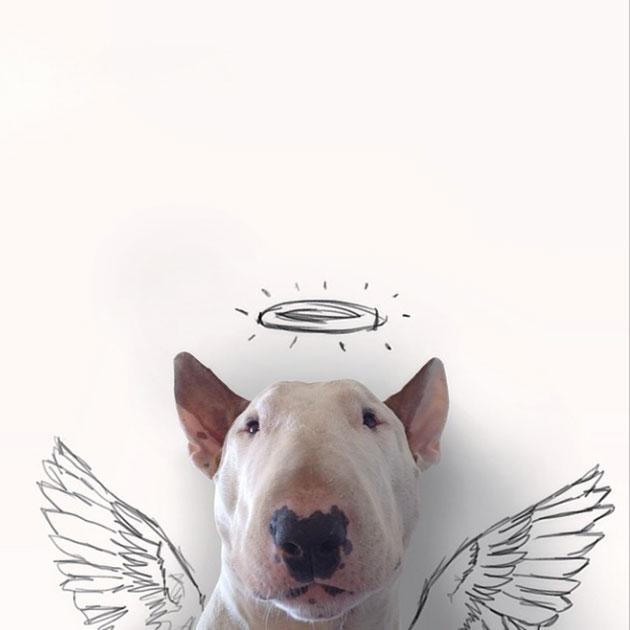 chien-ange