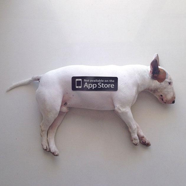 chien-apple