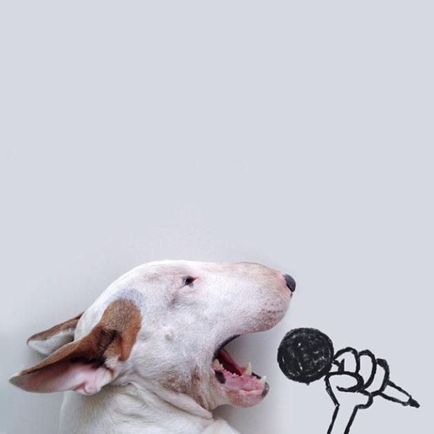 chien-chanteur