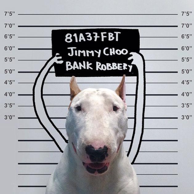 photo-de-bull-terrier