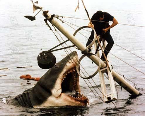 nom du requin des dents de la mer
