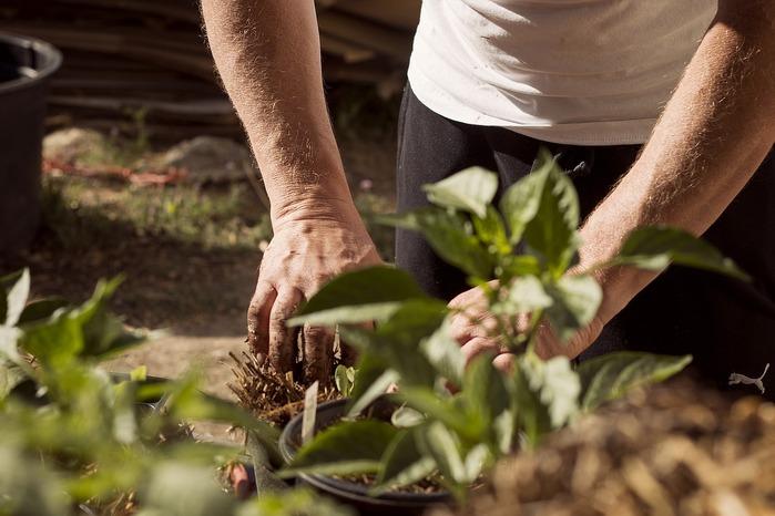 Quel arbre fruitier planter dans un jardin? On vous dit tout