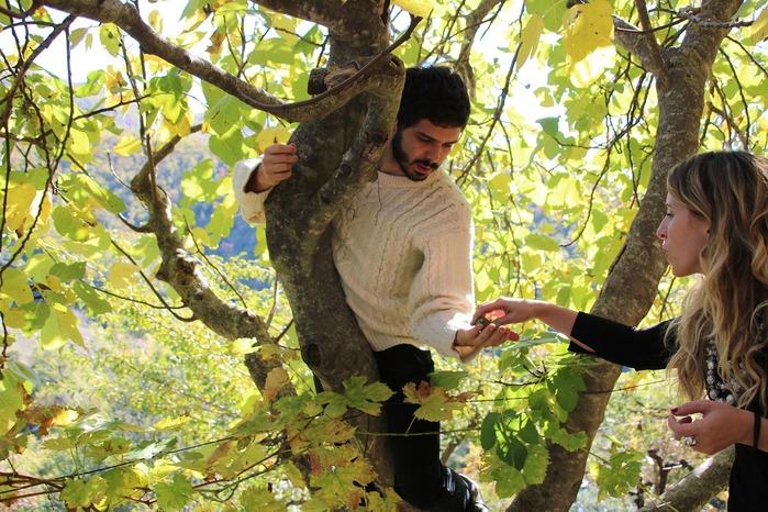 Quand et comment planter un arbre fruitier